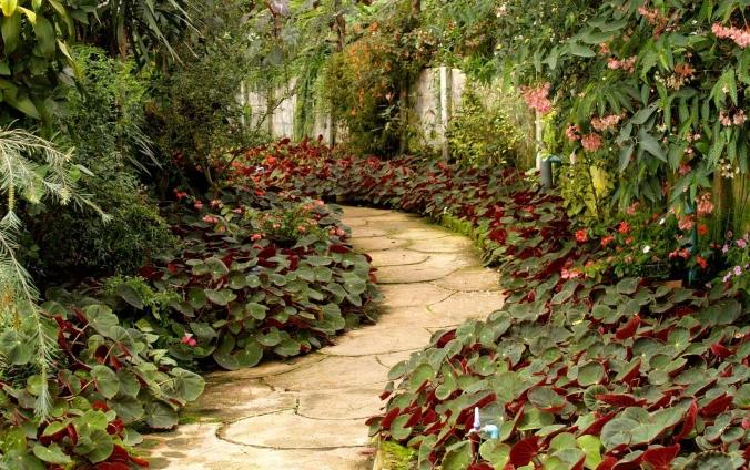 A path through a garden