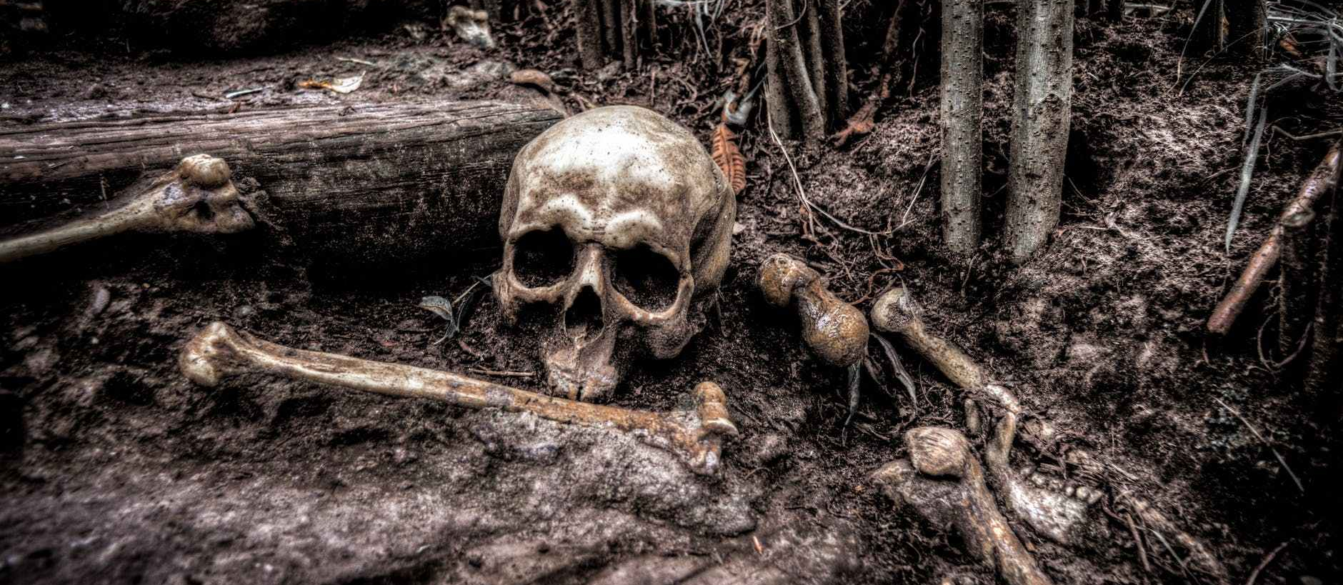 Skull and bones, half buried in a forest.