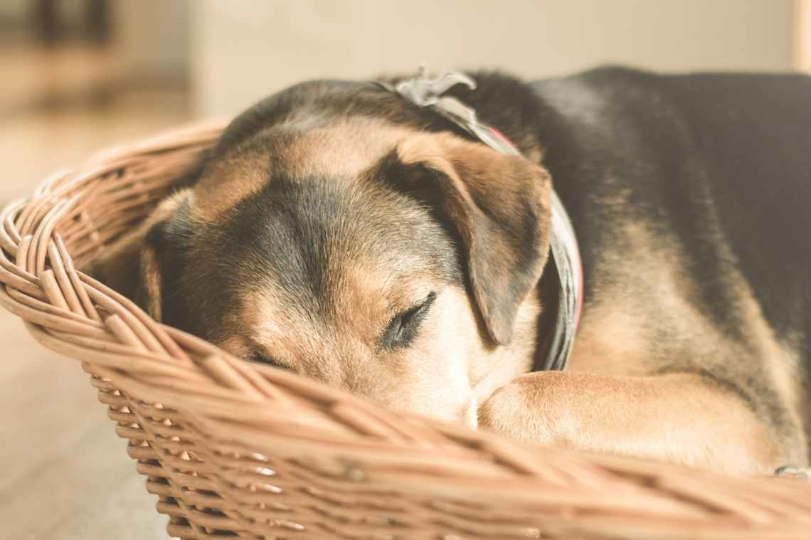 adorable animal basket cuddly